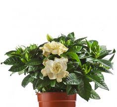7 bedroom plants to help you sleep better at night Bedroom Plants, Naturally Beautiful, Medicinal Plants, Outdoor Plants, Water Garden, Dream Garden, Houseplants, Perennials, Orchids