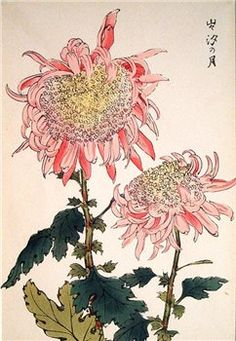Shodo Kawarazaki, Chrysanthemums and Wash Painting Art Art Art And Illustration, Illustrations, Art Floral, Japanese Prints, Japanese Art, Flower Prints, Flower Art, Illustration Botanique, Art Asiatique