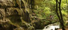 Gorges du Taubenloch Suze, Plants, Hobbies, Plant, Planets