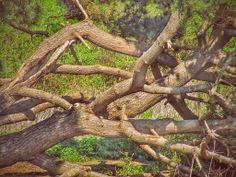 Fallen in the Bellingham Vineyards