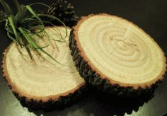 Rustic Oak Tree Trunk Slice - Rustic can be used so many ways, cheese board, trivet for hot food, trays or use in you wedding decor -