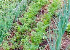 Plantați legumele printr-o metodă nouă. Rezultatul vă va surprinde foarte plăcut... - Fasingur Plants, Herbs, Garden, Home And Garden
