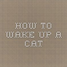 how to wake up a cat