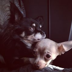 Prim With Love ~ Our Sophie & Cooper