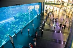 #‎DidYouKnow‬ the fact about ‪#‎Dubai‬ that some of the world's tallest and biggest structures are situated here. Biggest ‪#‎mall‬, tallest ‪#‎hotel‬, second largest man-made marina, and the world's largest ‪#‎aquarium‬ are located in Dubai.  www.akoupon.com