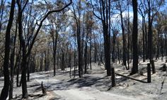 Perth Hills: The blaze tore through 650 hectares in the shire of Mundaring on Sunday.Photograph: AAP Image/DFES #wafires #bushfires