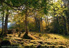 Paisatge i Natura: principi de la tardor a l'Artiga de Lin, Val d'Aran, Pirineu de Lleida