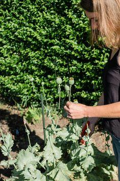 Mohn Gardening, Herbs, Fruit, Blog, Potting Soil, Fruit Garden, Harvest, Seeds, Lawn And Garden