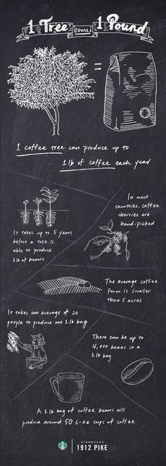 A coffee tree will flower and produce coffee cherries just once a year, yielding nearly 1 lb of roasted coffee.