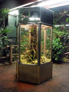 Terrarium for frogs and lizards Beautiful World Living Environments www.abeautifulwor...