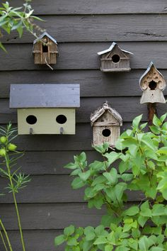Bird houses on the garden shed.  Photography Simon Griffths