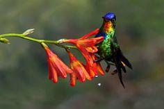 Chris Jimenez Avian and Nature Photography