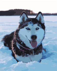 Cute Husky, My Husky, Husky Puppy, Husky Mix, Cute Puppies, Cute Dogs, Dogs And Puppies, Doggies, Huskies Puppies