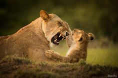 »does this hurt mom?« Masai Mara · Kenya    ********************* daschu MEDIA Facebook daschu MEDIA Homepage *********************