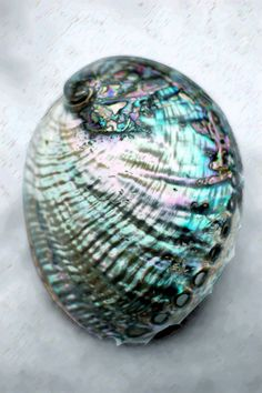 iridescent   mother-of-pearl   gleaming   shimmering   metallic rainbow   shine   anodized   holographic   oil slick   peacock   iridescence   Abalone
