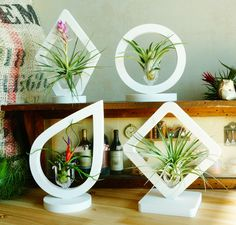 """"""" Simple and Easy to create art of Tillandsia Kit """" Joinflower - Tillandsia Terrarium Kit """" White Deco Art Collection"""" Water Drop, Circle, Square. www.joinflower.co.kr/www. joinflower.com"""