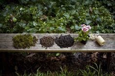 como hacer un jardin de kokedama Cómo hacer un jardín de Kokedama