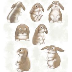 Some bunny character sketches  #rabbits #illustration