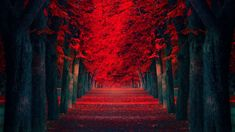 Red Trees Pathway HD Wallpaper