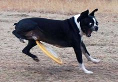 49 Photos of Dogs in Funny Situations