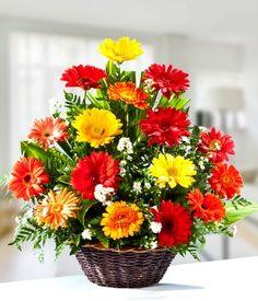 Canasta de Gerberas Basket Flower Arrangements, Modern Floral Arrangements, Ikebana Flower Arrangement, Gerbera Flower, Corporate Flowers, Church Flowers, Morning Flowers, Container Flowers, Floral Arrangements