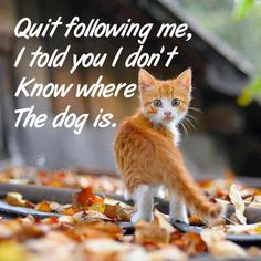 Quit following me..