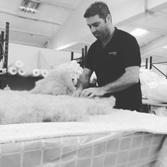 Here's one of our wonderful craftsmen, Tom, distributing the mounds of horsetail we use in one of our mattresses...the horsetail we use is shipped especially from Argentina! #craft #handmade #luxury