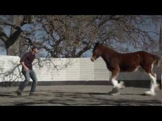 """▶ HD Clydesdales 2013 Budweiser Super Bowl Ad — Extended Version of """"Brotherhood"""" - YouTube"""