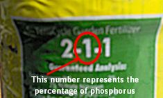 Plants need phosphorus for strong root growth, fruit, stem and seed development, disease resistance, and general plant vigor. Phosphorus doesn't move in the soil as easily as nitrogen does so you don't have to add it as frequently. your soil may have plenty of phosphorus, but it may be unavailable to plants. Phosphorus availability depends on warm soil temperatures, pH range, and the levels of other nutrients, such as calcium and potassium, in the soil.