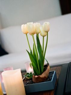 Potted Tulip Centerpieces @Dannica Odom love this with the candles