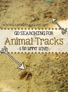 Animal Tracks Activity from LearnCreateLove.com
