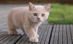 kitten perfection