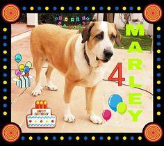 Hoy cumpleaños Marley le deseamos muchos mimos y chuches 💞🎉🎂🎈🎉💞