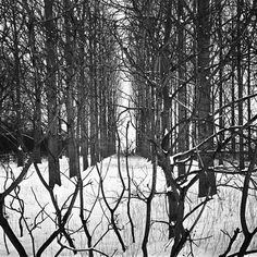 "Artist Paul Cooklin; Photography, ""Treeline, Beccles, Suffolk""  #art"