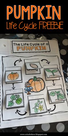Pumpkin Interactive Notebook Lifecycle Free Printable