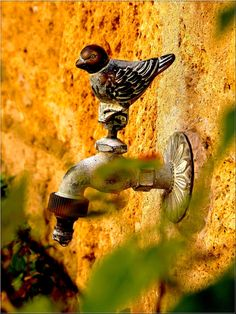 Water spout ~ French country