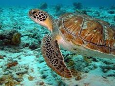scuba diving Bonaire melinda010100   http://media-cache6.pinterest.com/upload/187954984418072141_EeYcxsXT_f.jpg