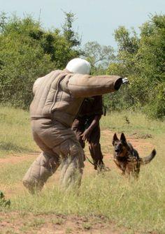 AP dog training Mkhaya Swazi