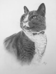 Heirloom quality graphite and charcoal portraits by Shreveport, Louisiana artist, Janet Maines. Charcoal Portraits, Graphite, Tuxedo, Cats, Artist, Animals, Graffiti, Gatos, Animales