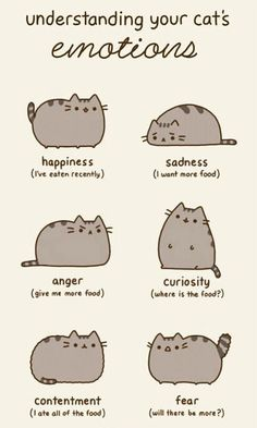 Emotions Of A Cat  (Really, these are also the emotions of a beagle.)