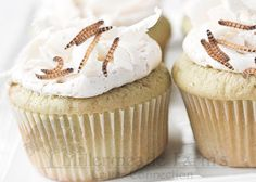 Hedgehog Safe Cupcakes 1 cup rice flour 1 cup baking soda 1/4 cup unsweetened applesauce1/4 cup ol