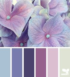 hydrangea hues color palette from Design Seeds Purple Color Schemes, Color Schemes Design, Colour Pallette, Color Combinations, Purple Palette, Purple Color Palettes, Color Tones, Paint Schemes, Design Seeds
