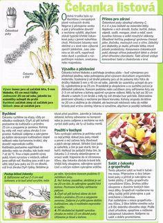 - Dieta Detox, Herbs, Entertainment, Gardening, Vegetables, Food, Catalog, Lawn And Garden, Essen