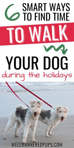 How to find time to walk your dog during the holidays - even when it feels impossible!