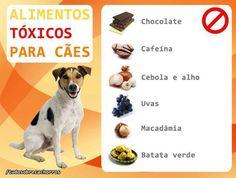 Cuidados com o nosso Pet! #cachorro #petmeupet