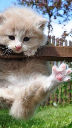 """""""There is no more intrepid explorer than a kitten"""