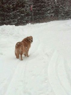 Let's play in the snow...