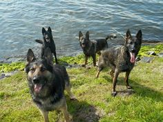 GSD Pack