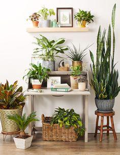 7 best ikea indoor plant stand images indoor house plants glass rh pinterest com