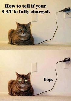 funny cat: How to tell if your cat is fully charged